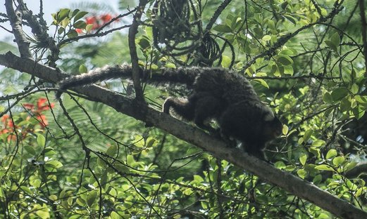 China registra 1ª morte por vírus transmitido por macaco