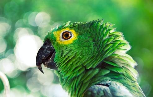 Bolsonaristas querem mandar prender o papagaio do Agamenon