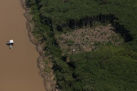 Supermercados europeus ameaçam boicote ao Brasil por desmatamento