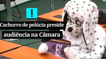 IMAGEM: Vídeo – Cachorro de pelúcia em audiência na Câmara