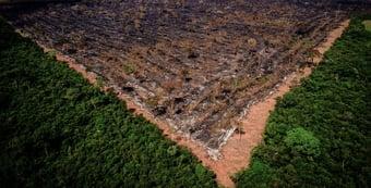IMAGEM: IBGE: Amazônia perdeu área maior que estado de SP em 18 anos