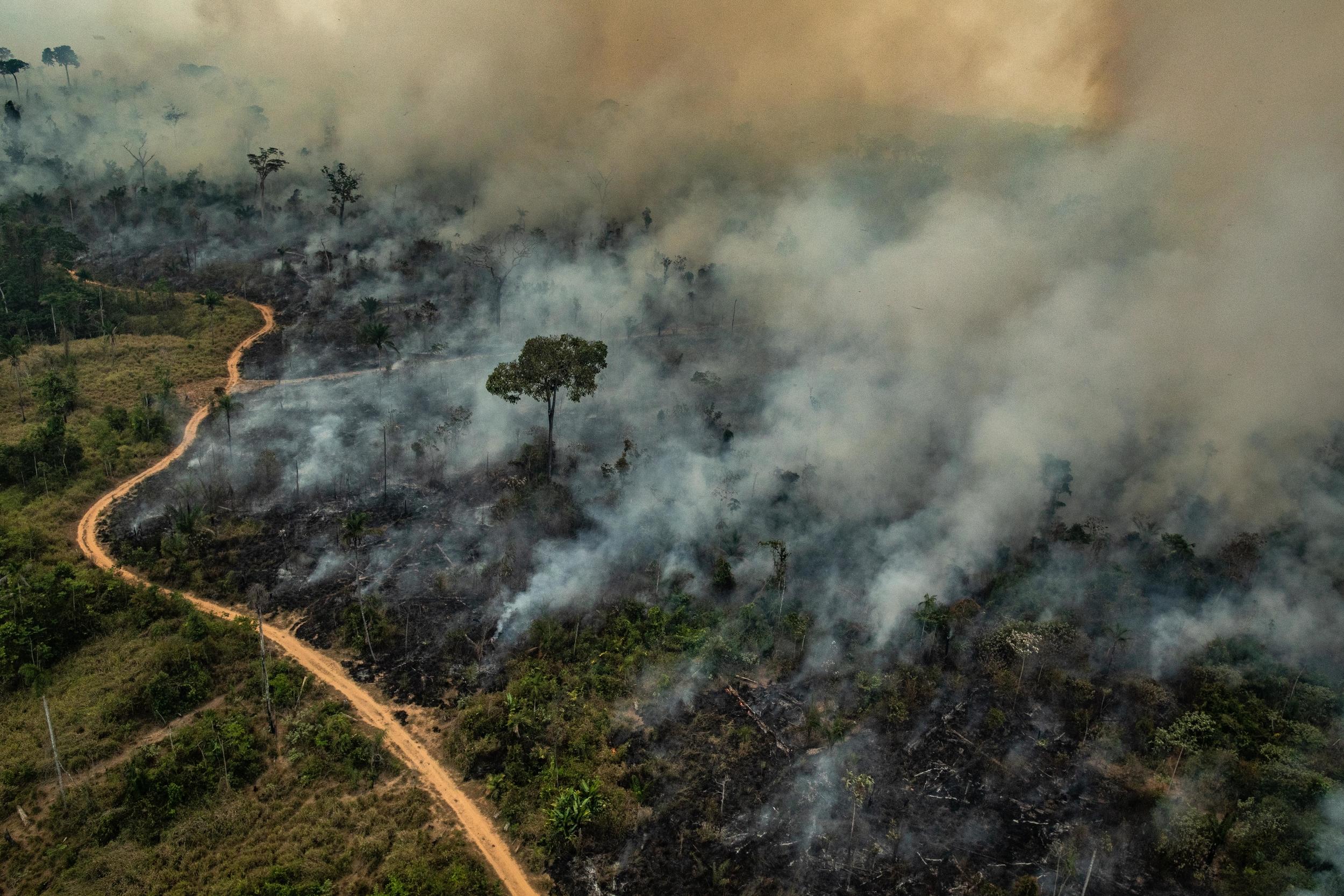 IMAGEM: Abril bate recorde de desmatamento na Amazônia
