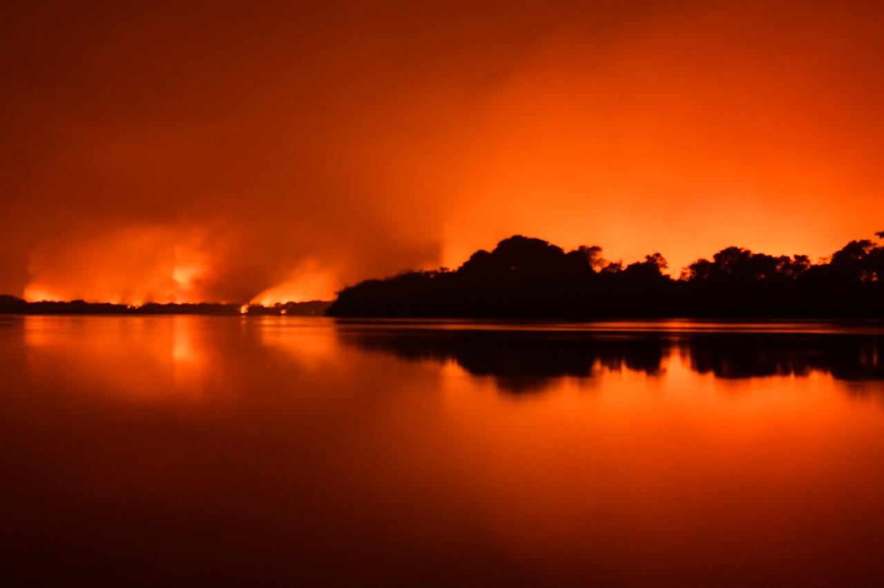 IMAGEM: PT quer engajamento de artistas a favor do Pantanal