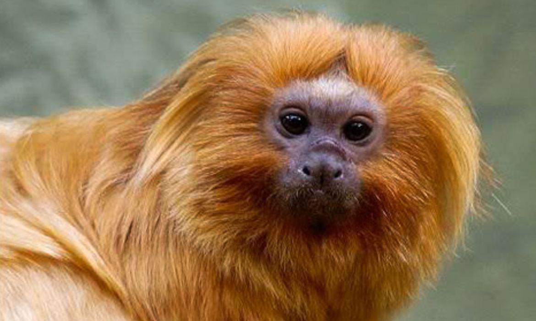 IMAGEM: Salles publica vídeo 'Amazônia não está queimando' com mico que não habita Amazônia