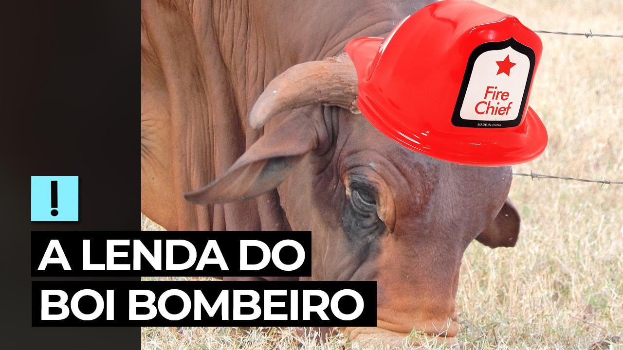 IMAGEM: Vídeo: a lenda do Boi Bombeiro