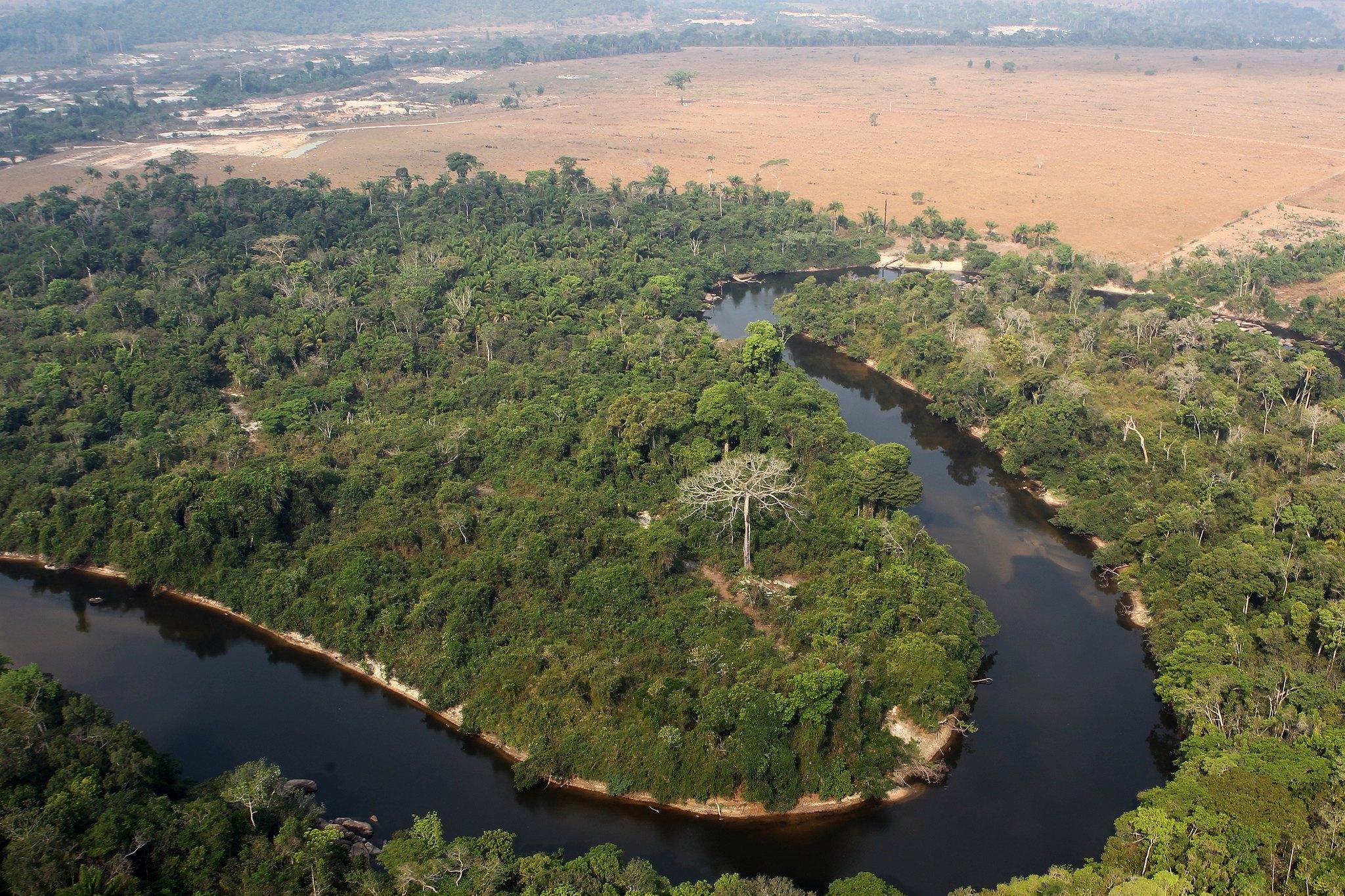 IMAGEM: PF diz que documento do Ibama foi usado para validar exportação de madeira ilegal aos EUA